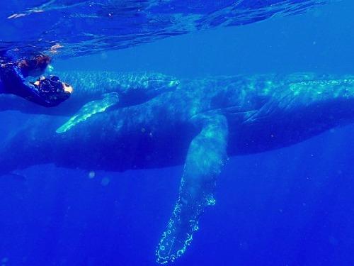 2月は奄美大島で大きな○○○さんに海で会うぞ~~